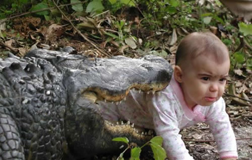 Alligators Are Not Suitable Babysitters (I'm Pretty Sure)