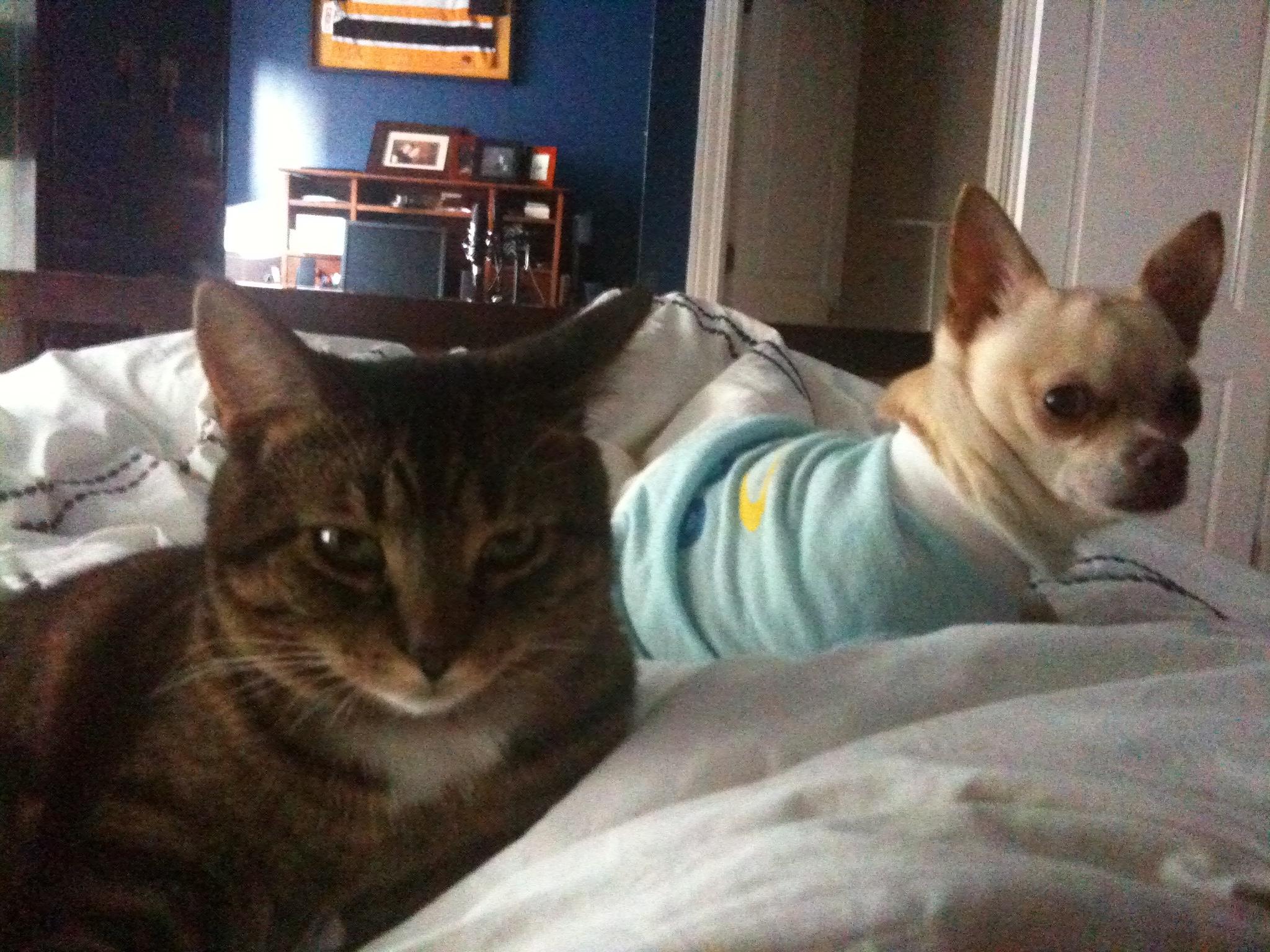 Cat Fur Smells Like Pee