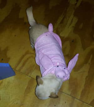 Lil' Miss Meepers Halloween Costume