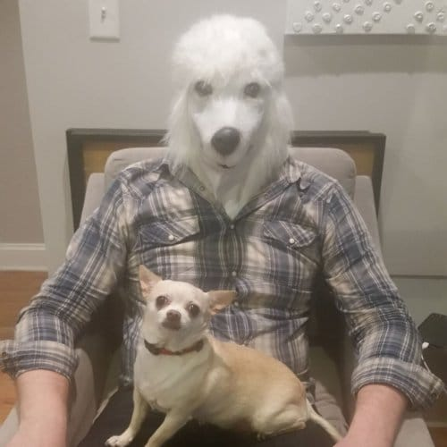 poodle businessman