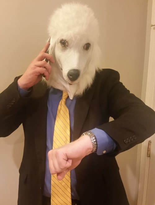 poodle businessman calling london