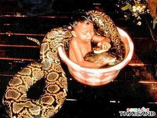 Thailand Snake Baby