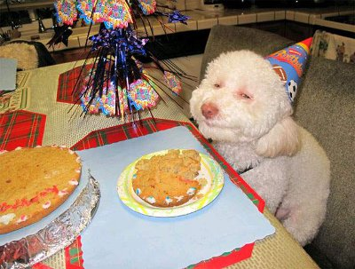stoned dog birthday party